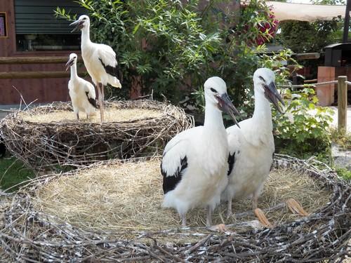 centre de réintroduction des loutres et des cigognes